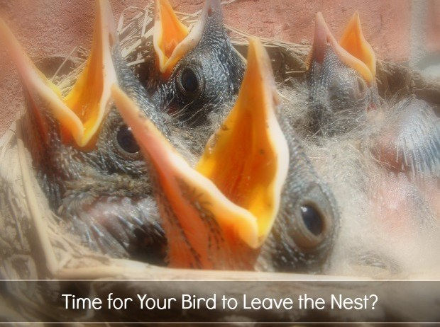 time for your bird to leave the nest? college planning